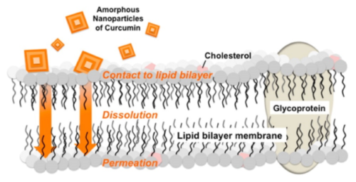 4. 難水溶性薬物の吸収改善